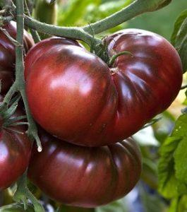 les-tomates