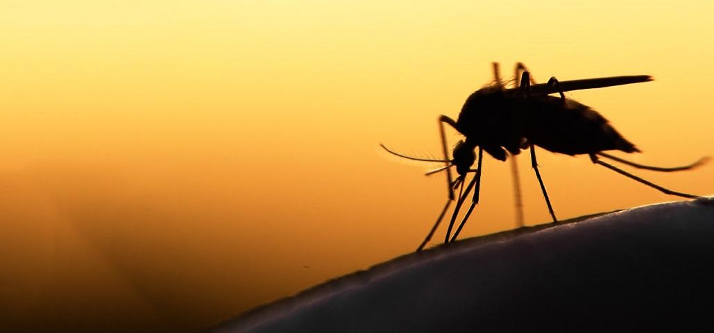Comment éviter ou soulager les piqûres de moustiques ?